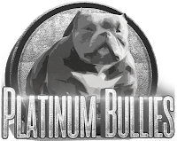 Platinum Bullies